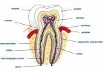 0001-conservativa1_dentista_centra_mestre-150x105